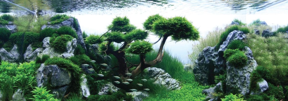 Hồ Thủy Sinh Rừng Núi